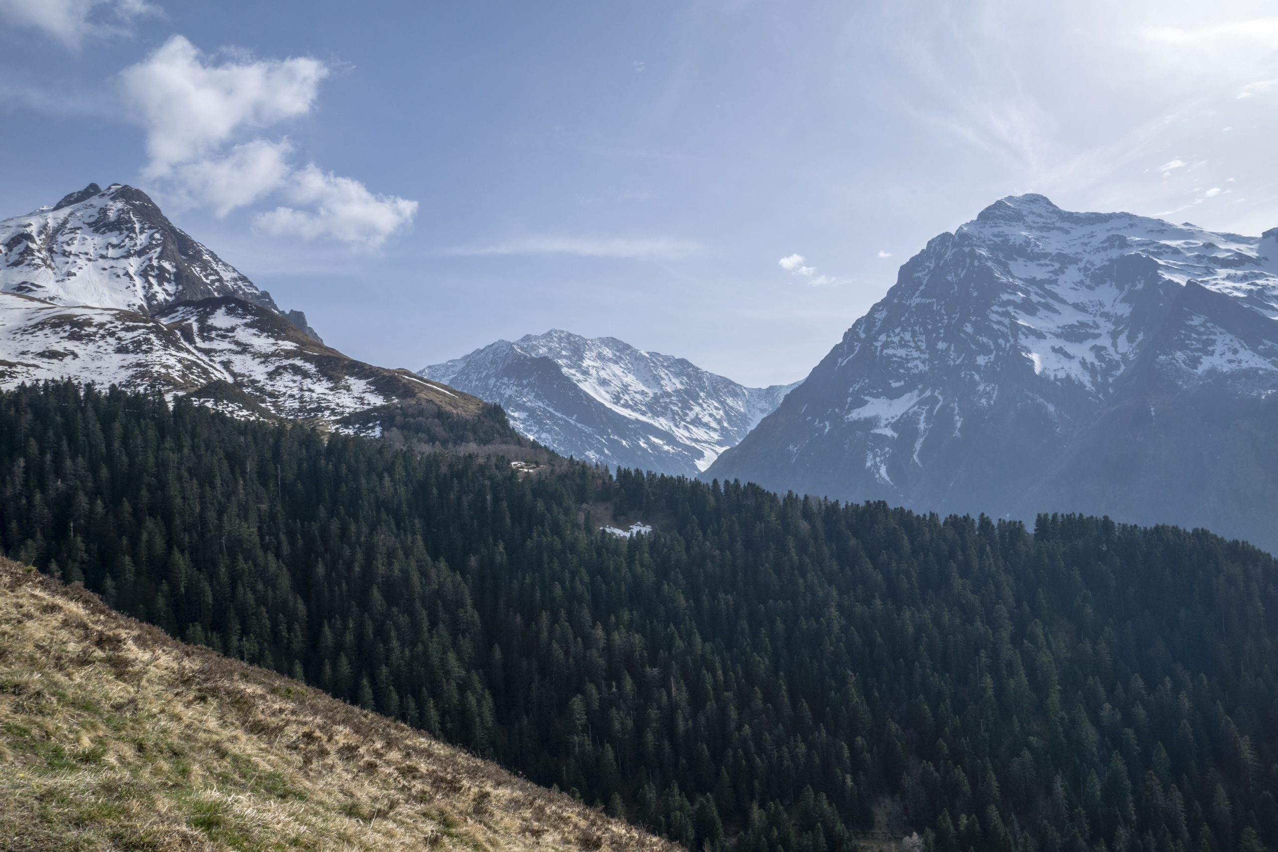 Forêt dourtiga Peyressourde scaled