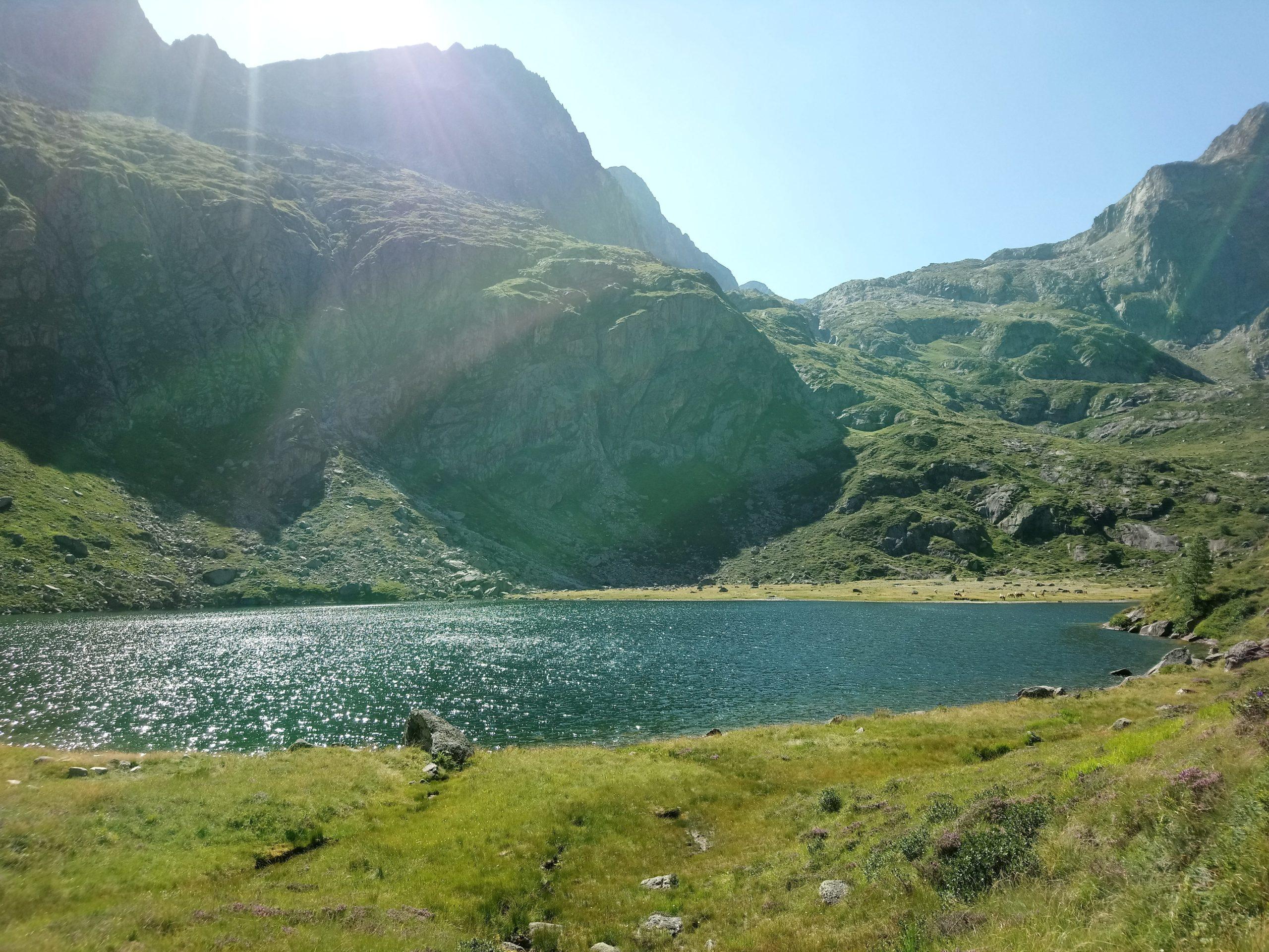 lac despingo scaled